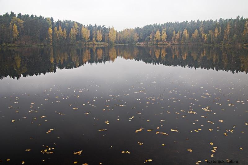 zelenogorsk-spb.ru
