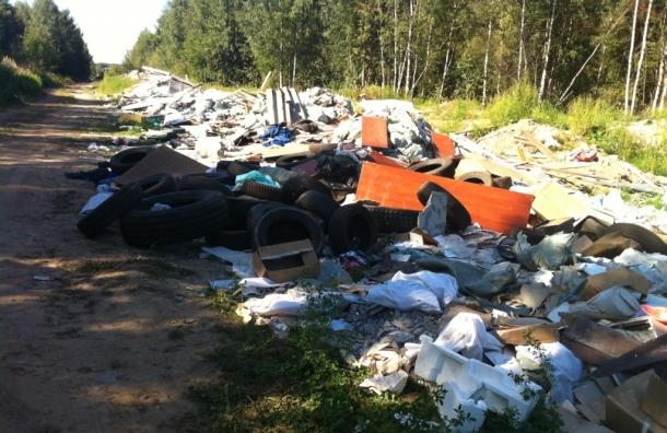 В лесах Всеволожского района экологи обнаружили несанкционированную свалку
