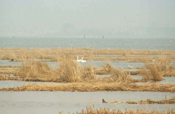 Петербуржцы призывают сохранить заказник «Южный берег Невской губы»