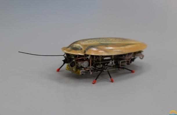 Ученые из Калининграда создали робота-таракана