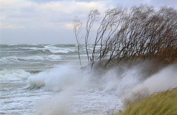 Сильный ветер ожидается в Ленобласти 19 сентября