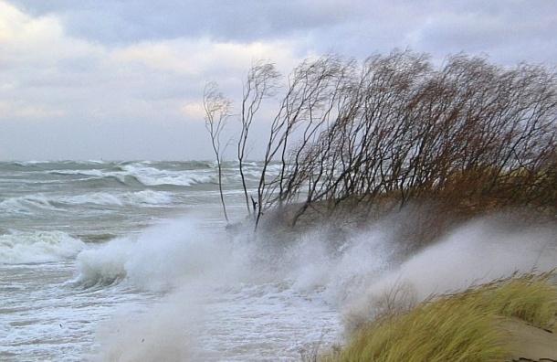 МЧС предупреждает о сильном ветре в Петербурге в ближайшие три дня