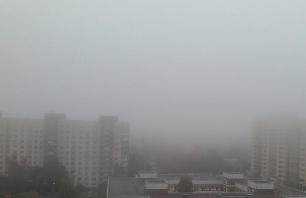 Туман накрыл Юг Петербурга