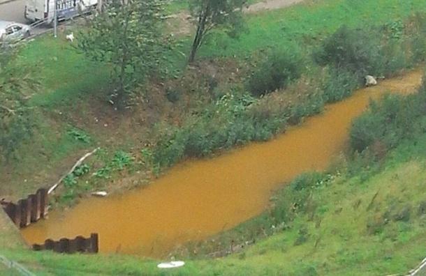 Река Мурзинка, впадающая в Неву, окрасилась в горчичный цвет