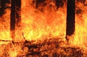 Женщину спасли из горящей квартиры на Васильевском острове