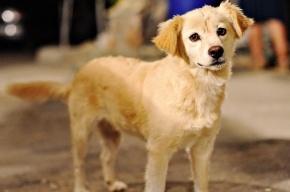 В Воронеже строители заживо замуровали беременную собаку