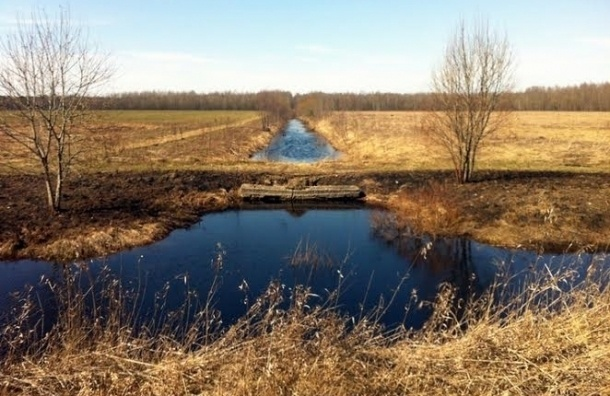 Игорь Албин пообещал решить проблему Кондакопшинского болота
