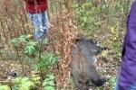 Фоторепортаж: «Кабана поймали в Петербурге»