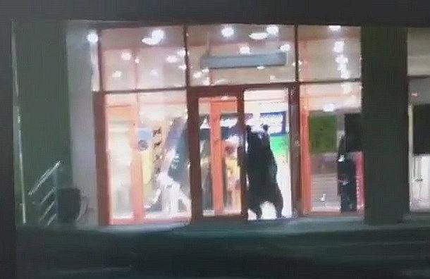 Раненый медведь забрался в торговый центр в Хабаровске