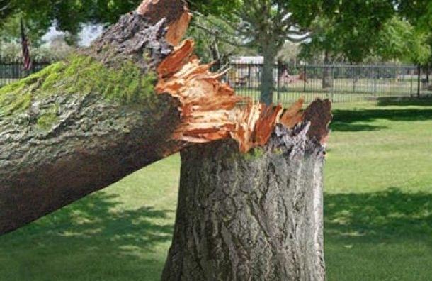 Сбой в движении электричек в Павловске произошел из-за упавшего дерева