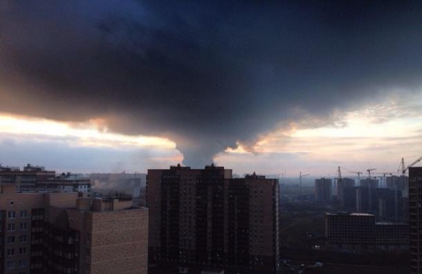 Пепел от мощнейшего пожара на Парнасе засыпает Новое Девяткино (видео)
