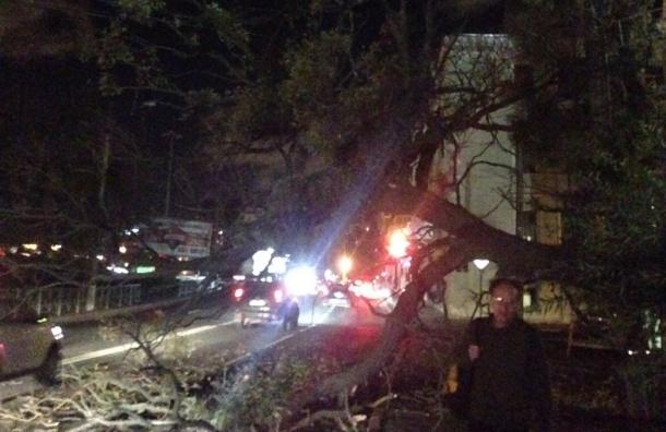 Последствия шторма в Петербурге: десятки упавших деревьев и летающие заборы