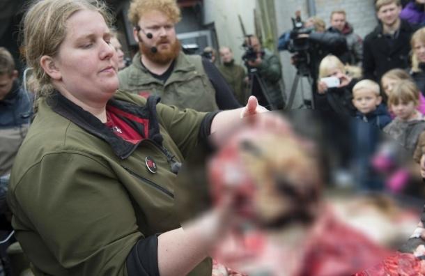Льва расчленили на глазах у людей в зоопарке Дании