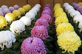 Цветы из Италии с насекомыми уничтожили в Кронштадте