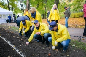 «Лента» продолжает традицию и дарит городу 30 000 луковиц тюльпанов