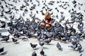 Петербуржцев просят не кормить в городе голубей