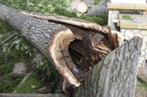 Дерево рухнуло на автомобиль на Двинской улице