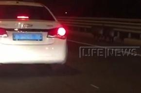 Полиция гонялась за кабанами по петербургскому КАД