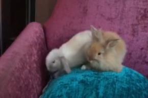 Полиция ищет кроликов, которых похитили из ресторана на Московском