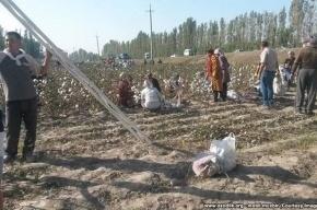 Жителей Ферганы заставили приклеивать собранный хлопок обратно к приезду премьера Узбекистана