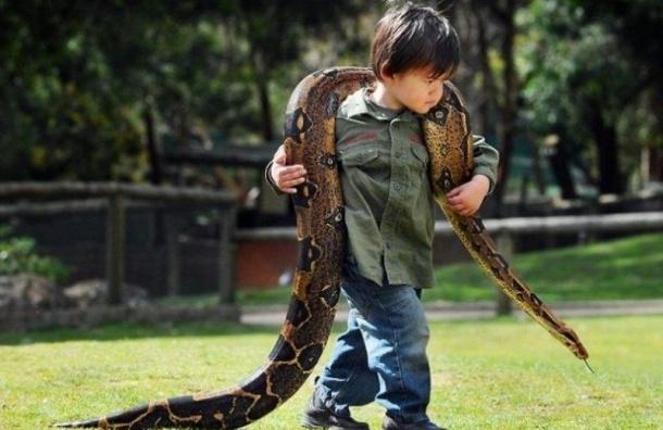 Полуторагодовалый бразилец загрыз ядовитую змею