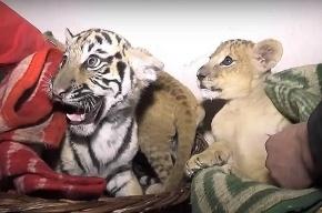 Животные в крымском парке «Тайган» могут умереть после отключения электричества