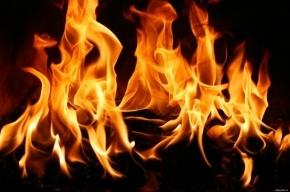 Почти 20 человек спасатели эвакуировали из горящего дома на Шаврова
