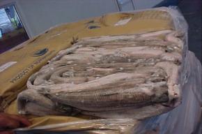 Партию молочной рыбы из Китая массой 26 тонн не пустили в Петербург