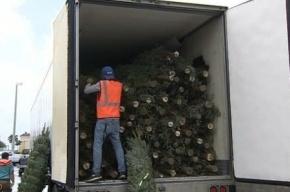 Две фуры с рождественскими елками угнали во Флориде