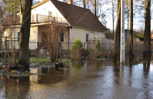 Поселок Александровская в Сестрорецке затопило из-за наводнения