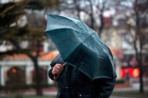 Усиление ветра вновь ожидается в Петербурге