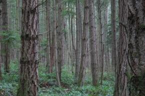 Кавказцы жестоко избили земляка на Луначарского, после чего вывезли в лес Ленобласти