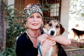 Бриджит Бардо просит Путина освободить осужденную за кражу собаки зоозащитницу