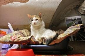 Перед Новым годом Эрмитаж отдаст два десятка котов