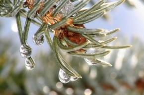 Аномальное тепло приедет в декабре в Петербург