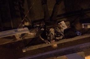 Очевидцы: труп под лестницей лежит с полудня на Славы