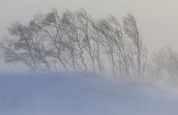 Снежная буря придет в Москву