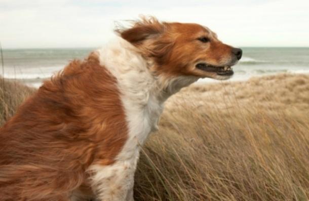 Сильный ветер ожидается в Петербурге утром