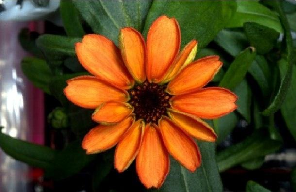 Впервые в истории МКС на станции распустился цветок