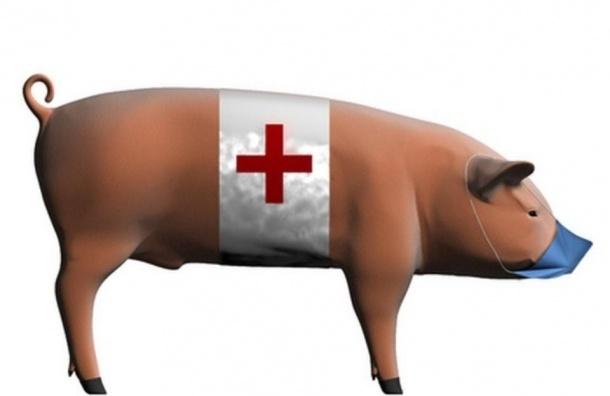 Петербург накроет «свиной» грипп