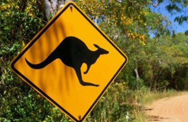 Житель Австралии хотел устроить теракт с помощью кенгуру