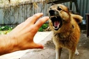 Жительницу Мордовии загрызла стая диких собак