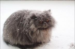 Гололед и низкую температуру обещает МЧС в Ленобласти