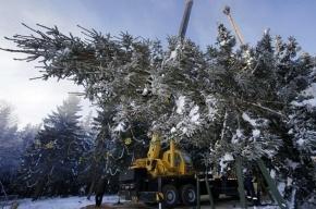 Московскую новогоднюю ель пустят на клюшки и музыкальные инструменты