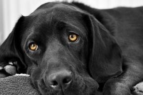 Полиция завершила расследование жестокого убийства пса в День Победы
