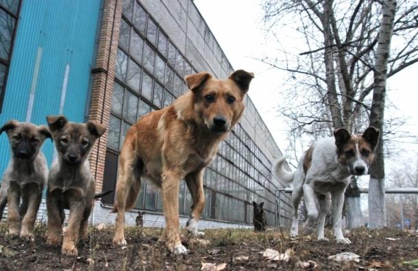 Собаки разрыли могилу и разгрызли труп в Отрадном