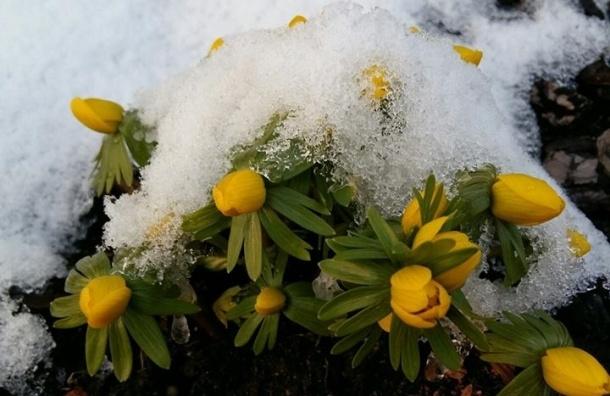 Ботанический сад считает, что в Петербург пришла весна