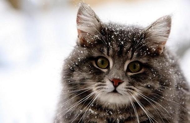 Живодёров, которые взорвали живого кота, отпустили на свободу