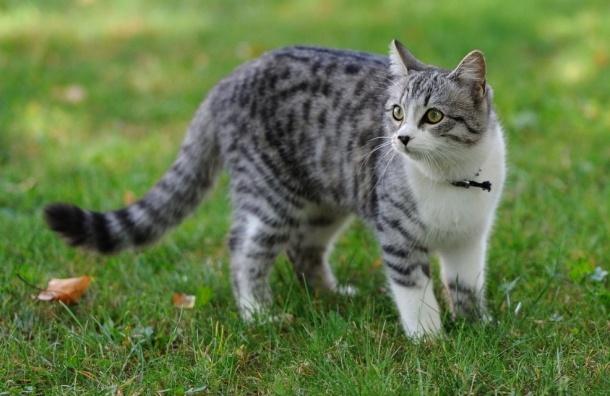 Подозреваемых в жестоком убийстве кота задержали в Рязани