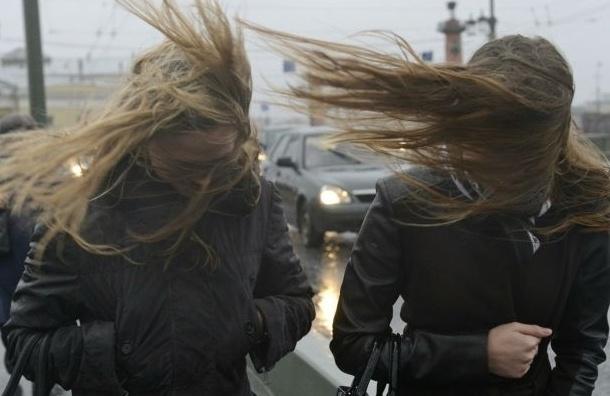 Сильный ветер ждут сегодня в Петербурге